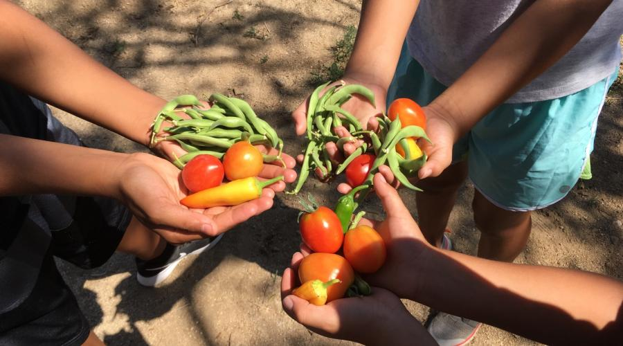 Photo of outstretched arms of youth holding their harvest from the Lone Pine Community Garden